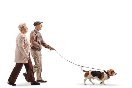 In voller Länge Profilaufnahme eines älteren Paares, das einen Basset Hound Dog isoliert auf weißem Hintergrund spazieren geht