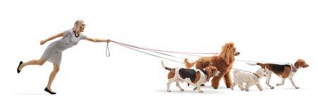 Photo de profil sur toute la longueur d'un promeneur de chien tiré par des chiens en laisse isolé sur fond blanc