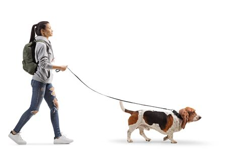 Full length profile shot of a female student walking a basset hound dog isolated on white background