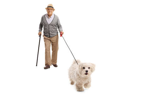 Full length portrait of an elderly man with a cane walking a maltese poodle dog isolated on white background