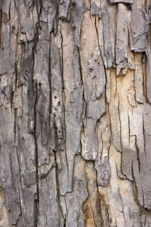 tree bark  Stock Photo - 13967182