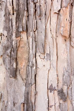 tree bark Stock Photo - 17036454