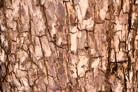 tree bark Stock Photo - 17036452