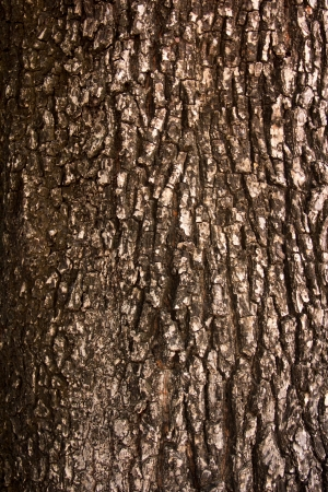 tree bark  Stock Photo - 17047009