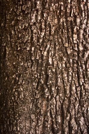tree bark Stock Photo - 17047009