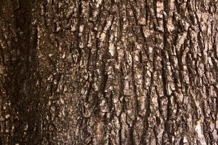 tree bark Stock Photo - 17047008