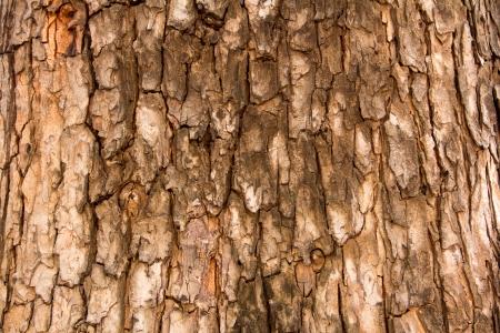 tree bark  Stock Photo - 17047067