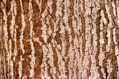 tree bark  Stock Photo - 17047069