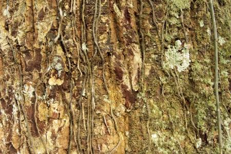 texture of tree photo