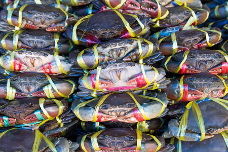 serrated: Fresh serrated mud crab on sale in the market. Stock Photo