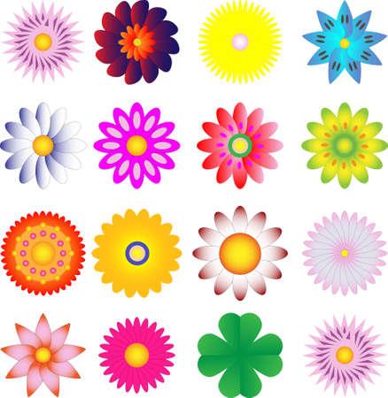 vivid flower background