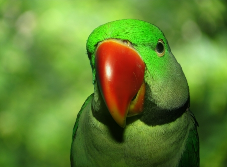 close-up of a adorable pet parrot photo