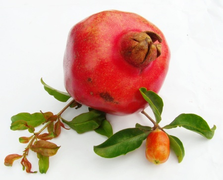 punica granatum: pomegranate  Punica granatum  fruit with leaves and a bud Stock Photo