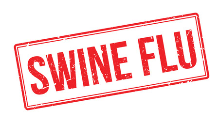 swine flu: Swine flu rubber stamp on white. Print, impress, overprint.