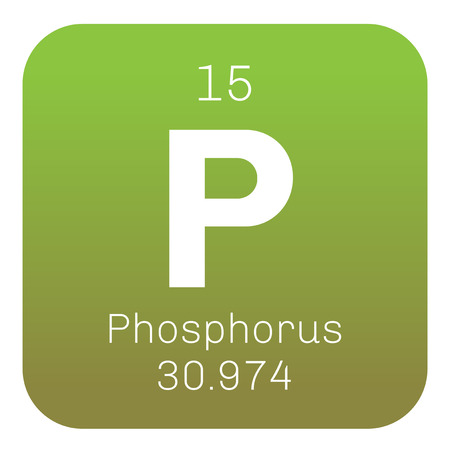chemical element: Phosphorus chemical element. Highly reactive element. Colored icon with atomic number and atomic weight. Chemical element of periodic table.