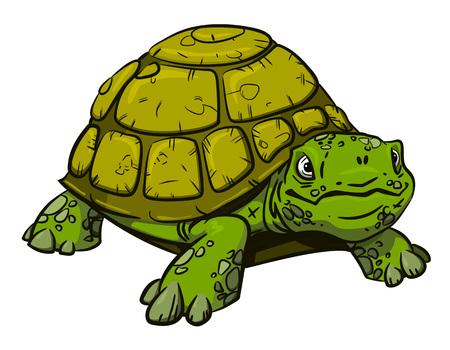 splinter: Cartoon image of turtle Illustration