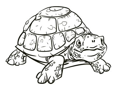 Cartoon image of turtle Illustration
