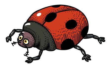 Cartoon image of ladybug