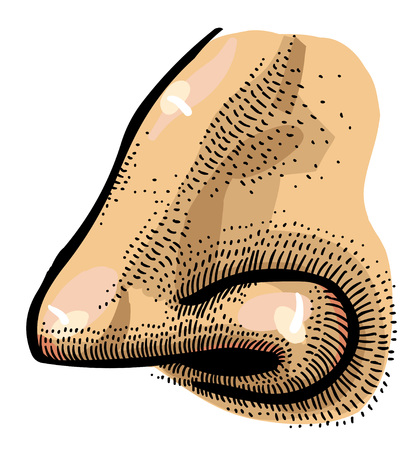sniffer: Cartoon image of human nose Stock Photo