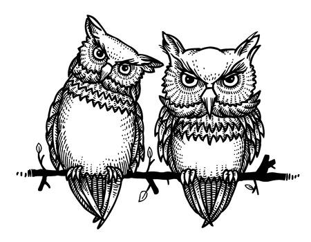 Cartoon image of cute owls