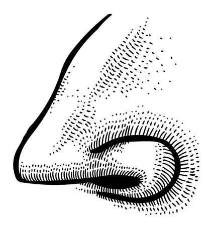 Cartoon image of human nose Illustration