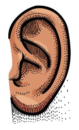 Cartoon image of human ear Çizim