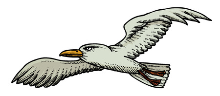 Cartoon image of seagull. An artistic freehand picture.