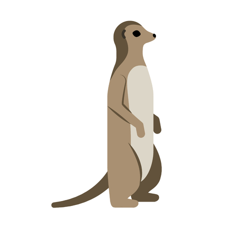 meerkat flat illustration on white Illustration