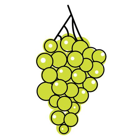 green grapes flat illustration on white Vecteurs