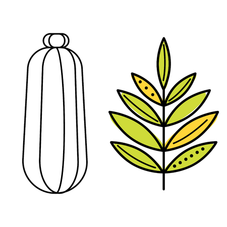 zucchini flat illustration on white