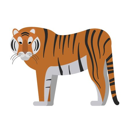 Tiger flat illustration on white