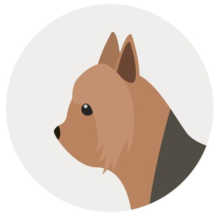 silky terrier , illustration on white background flat style