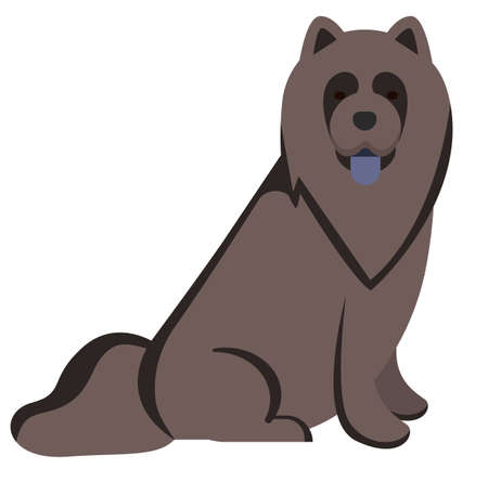 chow-chow , illustration on white background flat style