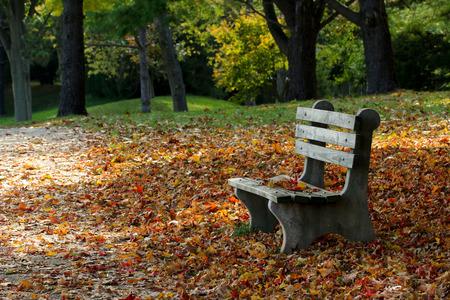 bankje in het park in de herfst