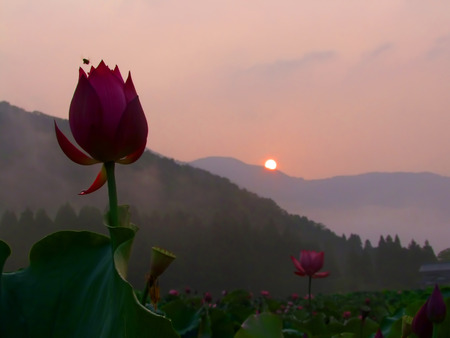 Close-up of blossomed flower with sun setting in the background photo