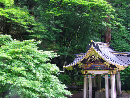 momiji: A small, colorful Japanese shrine is surrounded by Momiji, Japanese Maple, in the forest.