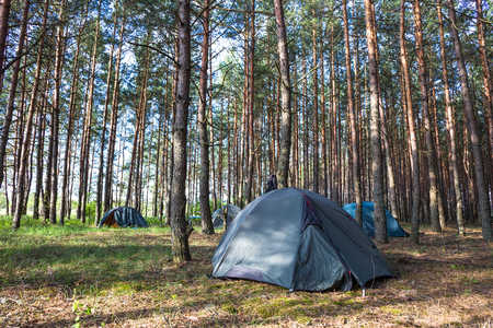 awaking: Tent in morning forest. Camping and beautiful nature.
