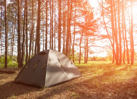 morning light: Tent in morning forest. Camping and beautiful nature.