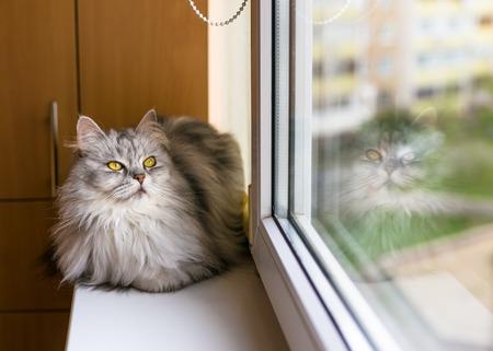 living idyll: Beautiful fluffy cat sitting on windowsill and looking to a window Stock Photo