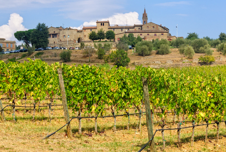 Vineyard under the medieval hilltop village of San Gusmè in Chianti, Tuscany, Italy Stock Photo