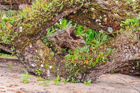 vanuatu: Natural frame - Espiritu Santo, Vanuatu Stock Photo