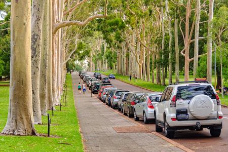 キングス ・ パーク - パース、オーストラリア、2013 年 1 月 8 日・ フレイザー アベニューに沿って壮大なユーカリ (開花赤ガムの木) 報道画像