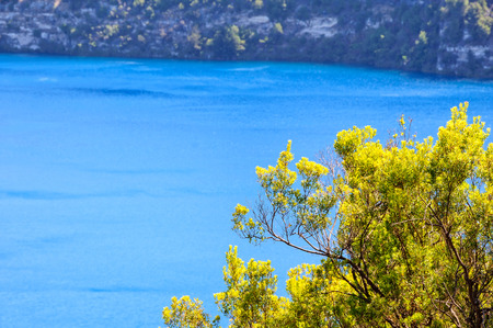 Shrub on the rim of the Blue Lake - Mount Gambier, SA, Australia Reklamní fotografie