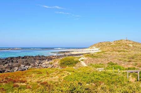 シアーウォーターの海鳥のコロニーの家、グリフィス島の曲がりくねったウォーキングトラック-ポートフェアリー、ビクトリア、オーストラリア 写真素材