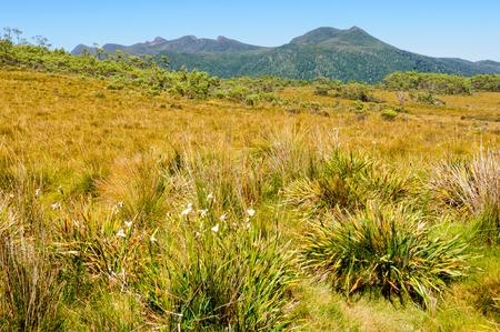 Uitzicht vanaf de koning William Saddle langs de Lyell Highway - Tasmanië, Australië