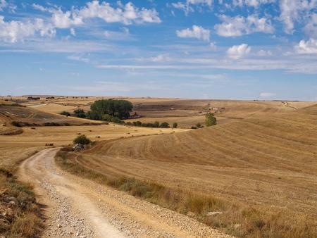 Curvatura su strada sterrata attraverso la Meseta - Hornillos del Camino, Castiglia e Leon, Spagna