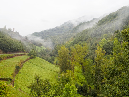 Foggy morning on the Camino in the Valcarce Valley - Las Herrerias, Castile and Leon, Spain