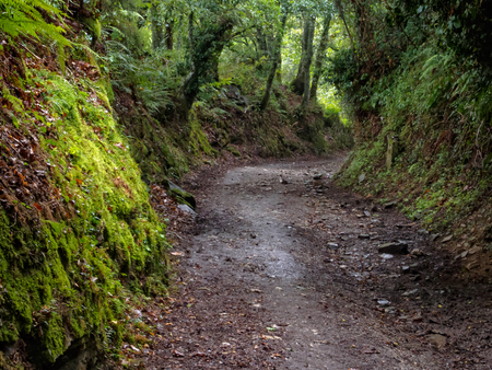 Lush green vegetation along a muddy Camino track in a rainy autumn afternoon - Fonfria, Galicia, Spain 版權商用圖片