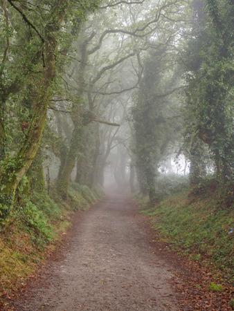 Camino track in foggy woods - Mamurria, Galicia, Spain