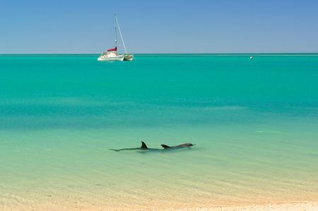 Dolphins in the Shark Bay Marine Reserve - Denham, WA, Australia